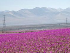 Claim to fame: Crossing the borders of Chile, Peru, Bolivia, and Argentina, the Atacama is the dries... - Getty