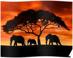 Acacia Elephant Sunset Posters