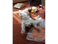Timmy sprawled