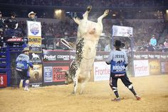 927 Air Time by PBR PR@InsidePBRPR Feb 24 2017. THANK YOU, FANS! 3 weeks in a row @PBR on CBS draws more viewers than NHL on NBC. Bulls so excited, they're doing cartwheels
