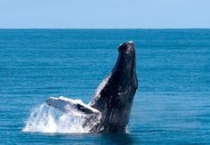 Revista El Cañero: Avistaje de ballenas en República Dominicana