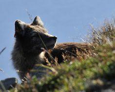 Arctic Fox Centre Súðavik