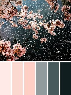 Color Inspiration : Blush + Grey + Black Cherry Blossom inspired spring color palette