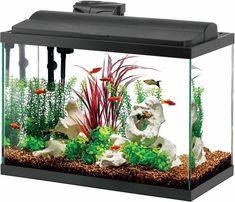 Aqueon LED Aquarium Aquarium Kit, Aquarium Design, Aquarium Fish Tank, Planted Aquarium, Fish Aquariums, Tropical Freshwater Fish, Tropical Fish, Guppy, 30 Gallon Fish Tank