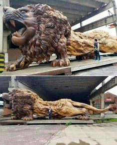 Giant lion sculpture carved from a single dead redwood tree. It took 20 people over 3 years to complete