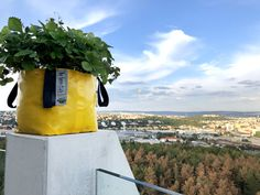 Strawberries growing in Urban planters Yellow Plants, White Plants, Colorful Plants, Real Plants, Growing Plants, Urban Planters, Wall Waterproofing, Plant Bags, Irish Design