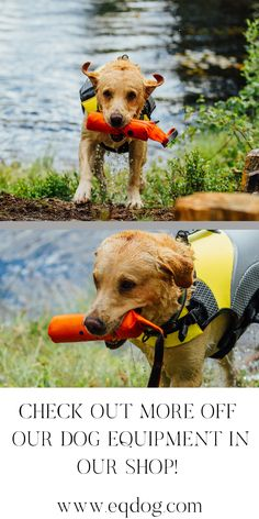 Check out our online shop for more off our outstanding dog equipment! Walking Equipment, Dog Walking, New Toys, Dog Owners, Your Dog, Labrador Retriever, Vest, Lovers, Gift Ideas