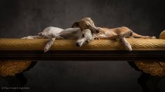 greyhound lovers will appreciate this one....flat out dog tired http://www.vektfxdesigns.com