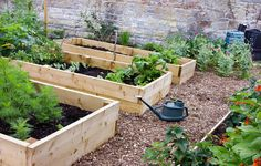 5 Secrets For A High-Yield Vegetable Garden, Even When You're Tight On Space - 101 Gardening