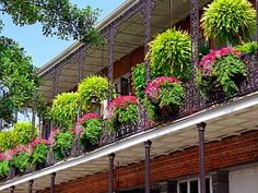 """french quarter flower boxes 