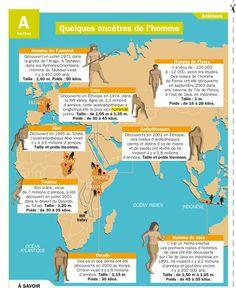 Educational infographic & data visualisation   Quelques ancêtres de l'homme   Infographic   Description  Fiche exposés : Quelques ancêtres de l'homme                                                                                                                                    ... - #Educational