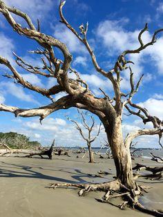 Driftwood Beach. Jekyll Island GA. Gorgeous!