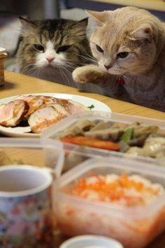 Comida!!!