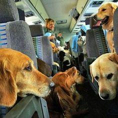 Oltre 60 mila animali, soprattutto cani e gatti, hanno viaggiato quest'estate sulle Frecce di Trenitalia, 12 mila di questi di media e grossa taglia.