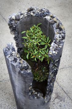Ash Votive 2011 fibre reinforced concrete made from portland cement, coal-combusted by-products, vermiculite and iron oxide. Species include...
