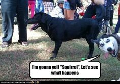 squirrels with captions - Google Search (photo bomb Derp HUSKY!!❤️™)