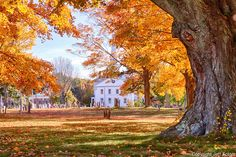 White church steeple of the First Congregational church can be seen through the golden yellow and orange fall foliage from the nearby cemetery. Hanover Massachusetts on Main street. 547 Hanover St<br /> Hanover, MA 02339