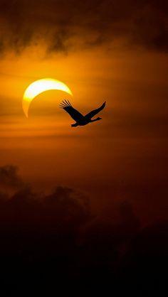 Birds, geese, swans, night