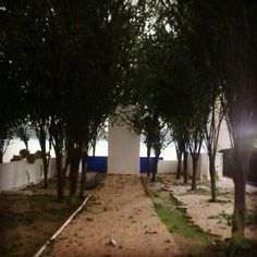 """Las arboledas"", Luis Barragán. #PaseoDeLosGigantes #MuroAzul #ElBebedero #Eucaliptos #3Escalas #ReglaDeOro #Arquitectura #UniversidadMarista #7°LaboratorioHistoria #Ituarte #Broid #Rocha"