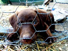 Sad puppy by Ellie Oprea Fine Art America, Sad, Puppies, Wall Art, Pictures, Photography, Animals, Fotografie, Animales