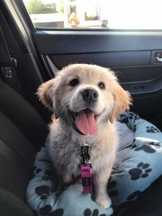 Things that make you go AWW! Like puppies, bunnies, babies, and so on. A place for really cute pictures and videos! Super Cute Puppies, Cute Baby Dogs, Cute Little Puppies, Cute Dogs And Puppies, Cute Little Animals, Cute Funny Animals, Doggies, Retriever Puppy, Cute Animal Pictures