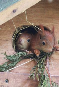 Mama Squirrel Is In For Double Trouble with These Cuties