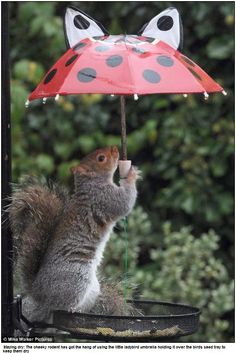 Squirrels need to stay dry too ya see. Wanna get under my little red umbrella with me??
