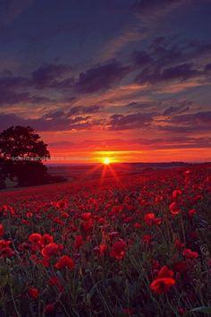 Poppy Field Sunset  | nature | | sunrise |  | sunset | #nature biopop.com/… Poppy Field Sunset  | nature | | sunrise |  | sunset | #nature biopop.com/  http://www.scienceandnature.science/2017/05/24/poppy-field-sunset-nature-sunrise-sunset-nature-biopop-com/