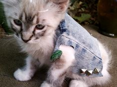 Bad to the bone #cats #cute kittens