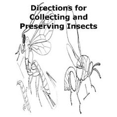 http://p-interest.in/redirector.php?p=B007P4XZKQ  Directions for Collecting and Preserving Insects (Illustrated) (Annotated) (Kindle Edition)