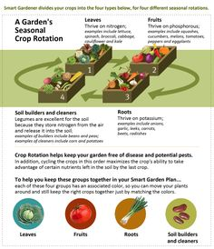 Four year crop rotation
