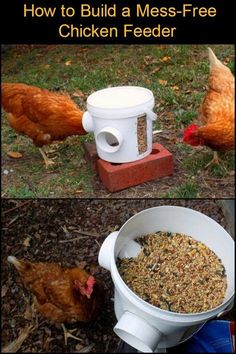 Chicken Coop - Keep Your Backyard and Your Chicken Coop Clean With This DIY Mess-Free Bucket Chicken Feeder Building a chicken coop does not have to be tricky nor does it have to set you back a ton of scratch. Chicken Coop Designs, Chicken Coop Kit, Chicken Barn, Portable Chicken Coop, Best Chicken Coop, Backyard Chicken Coops, Building A Chicken Coop, Chicken Runs, Chickens Backyard