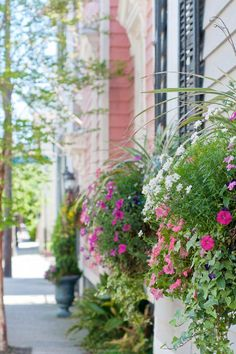 Charleston, SC Gardens--my great love  ISSUU - Gardens of South Carolina by Georgianna Lane