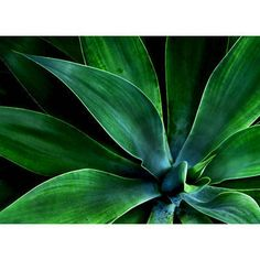 Zuo Modern 20027  Green Leaves Wall Art