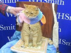 Bob with a brand new scarf at the latest book signing - from FB page James Bowen & Street Cat Bob