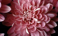 Nov Flower Tatt