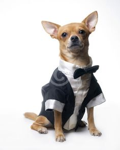 This is obviously what Reggie will be wearing.