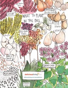 What to plant in the fall: vegetables, flowers and plants that grow well in colder months