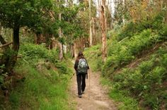 """Our pilgrimage trail walk takes us on a small part of the Camino, from Le Puy to Conques. This portion of the route is called the """"Via Podensis,"""" which is one of the oldest and most well-preserved parts of the trail. This pilgrimage route is registered on the World Heritage list of UNESCO."""