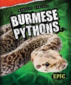 J 597.96 OAC. Engaging images accompany information about Burmese pythons.