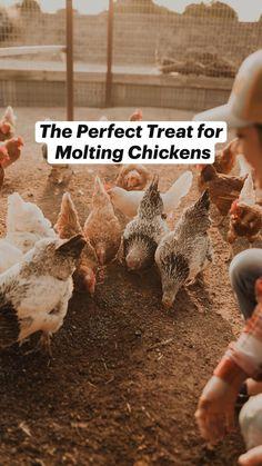Raising Quail, Raising Chickens, Farm Animals, Cute Animals, Black Oil Sunflower Seeds, Chicken Coop Designs, Chicken Feed, Christmas Snacks, Vegetable Garden Design