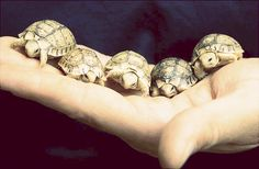 baby turtles!