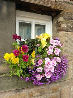 Pretty and colorful flowers on the windowsill.