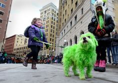 El mundo se tiñe de verde por San Patricio. St Patrick's dog