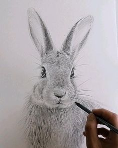 Pencil Sketches Of Animals, Realistic Animal Drawings, Realistic Pencil Drawings, Horse Drawings, Graphite Drawings, Art Drawings Sketches Simple, Bird Drawings, Pencil Art Drawings, Drawing With Pencil