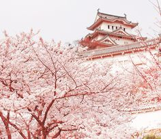 Japan...lived there once upon a time, ready to see it again!