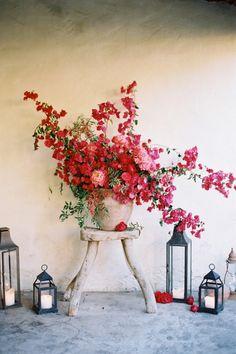 Een erg mooie combinatie en feature voor in de tuin, een bougumvillia