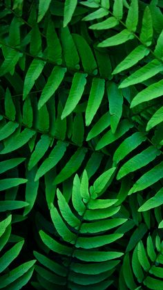 New wallpaper green leaves nature ideas Green Trees, Green Plants, Green Leaves, Plant Leaves, Green Leaf Wallpaper, New Wallpaper, Nature Wallpaper, Leaf Photography, Planets Wallpaper