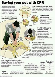 We had a client call recently with questions about Pet First Aid and CPR courses.  Your local Red Cross holds classes.