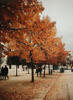 Habitually Chic® » Autumn Inspiration 2016